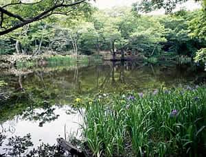 『平伏沼』の画像