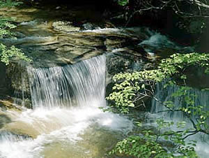 『千翁川』の画像