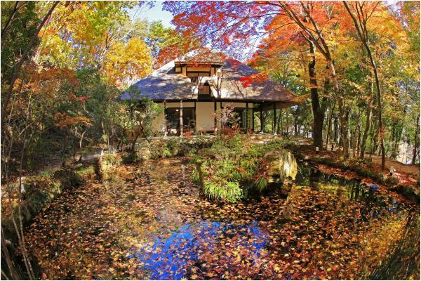 『『秋色につつまれて』の画像』の画像
