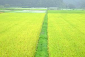 『稔と緑のパッチワーク』の画像