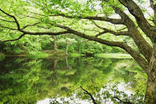『平伏沼の風景』の画像
